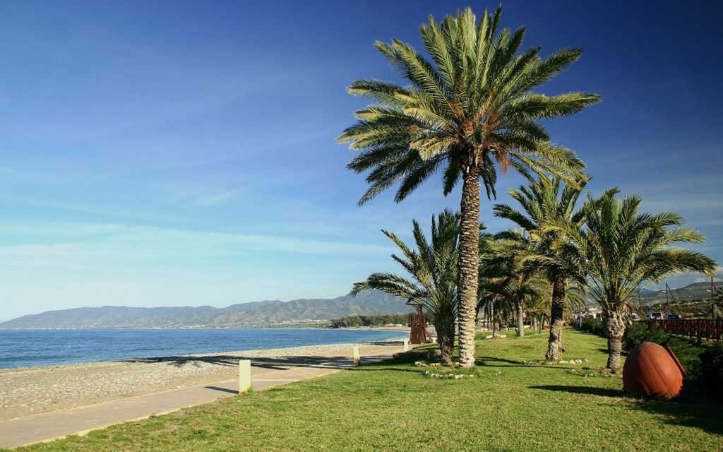 Palm trees by the sea in Cyprus. The Discovery of Cyprus holidays package.