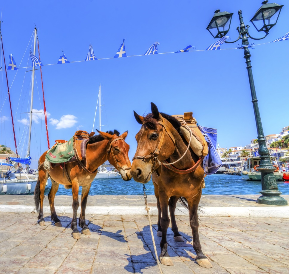 Two donkeys by the sea at one of the Greek islands, the most popular destinations in Greece.