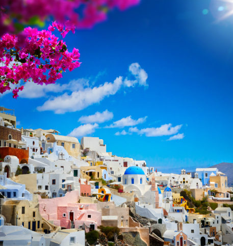 Beautiful houses in a village on Santorini island. Pink flowers in the front of the photo.