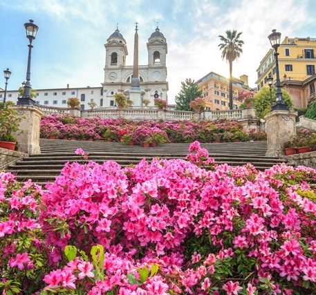 Pink flowers at the Spanish Steps in Rome, one of the most famous sightseeing places in Italy.